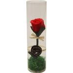 Vrtnica rdeča preparirana v dekorativni PVC embalaži 6x22cm