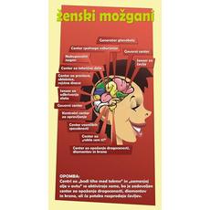 Karikatura fore - Ženski možgani (22,5 x 12cm)