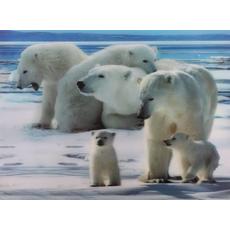 Darila Slika 3D Polarni Medvedje