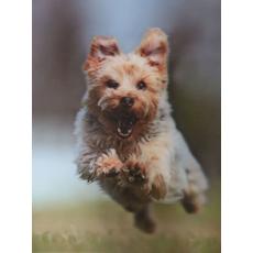 Slika 3d Yorkshire Terrier
