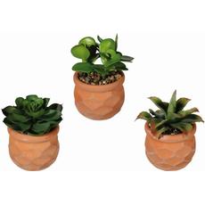 Dekorativen kaktus v  lončku, 13x8cm, sortirano
