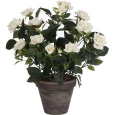 Dekorativna lončnica Vrtnica mnogocvetna, bela, umetno cvetje v lončku, 33cm