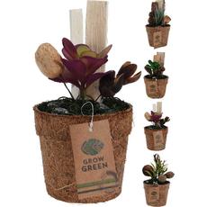 Dekoracija, kaktus v lončku, 9cm, sort.