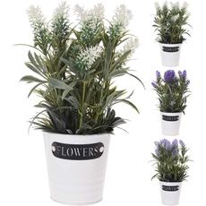 Rastline v kovinskem lončku, 3 vrste