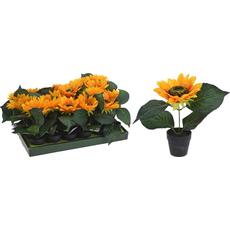 Sončnice v lončku, 22cm, 2 vrsti