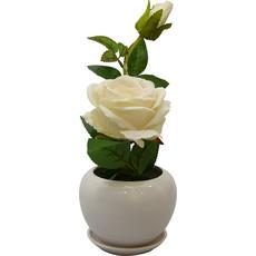 Vrtnica krem v cvetličnem lončku kartonska embalaža 29,5cm
