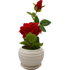 Vrtnica rdeča v cvetličnem lončkukarton embalaža 29,5cm
