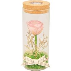 Vrtnica oranžna s cvetjem preparirana v steklu, LED 7x7x17cm