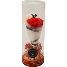 Vrtnica rdeča preparirana v dekorativni PVC embalaži, LED 9x9x24cm