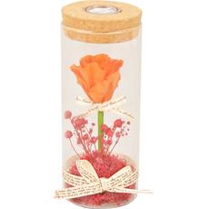 Vrtnica roza s cvetjem preparirana v steklu, LED 7x7x17cm